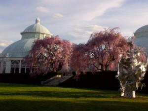 4.20.2013 NY Botanical3