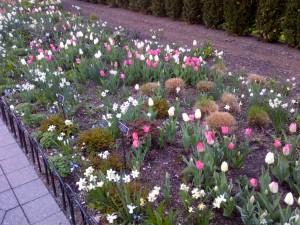 4.20.2013 NY Botanical4