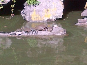 carter turtle